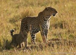nadine-wright-5614-copyright-photographers-on-safari-com