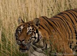neil-hastings-5438-copyright-photographers-on-safari-com