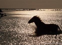 nicola-billows-5440-copyright-photographers-on-safari-com