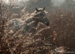 nicola-billows-5442-copyright-photographers-on-safari-com