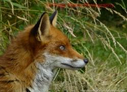 paige-marns-5563-copyright-photographers-on-safari-com
