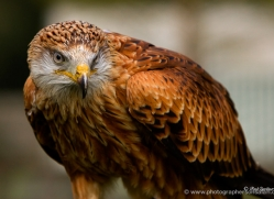 paul-gardiner-5450-copyright-photographers-on-safari-com