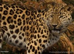 paul-gardiner-5451-copyright-photographers-on-safari-com