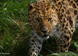 paul-gardiner-5452-copyright-photographers-on-safari-com