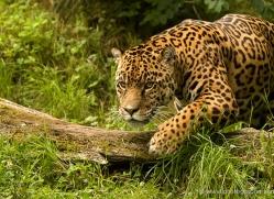 paul-gardiner-5455-copyright-photographers-on-safari-com