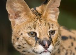 paul-shaw-5458-copyright-photographers-on-safari-com