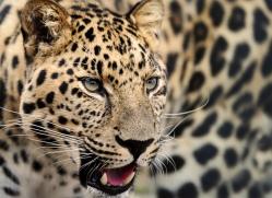 peter-jepson-5460-copyright-photographers-on-safari-com