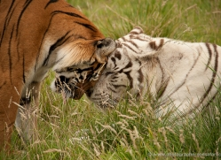 peter-quinn-5564-copyright-photographers-on-safari-com