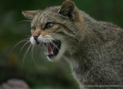 phil-homer-5596-copyright-photographers-on-safari-com