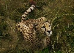 pippa-smith-5462-copyright-photographers-on-safari-com