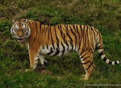 pippa-smith-5463-copyright-photographers-on-safari-com