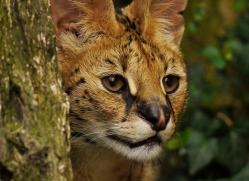 pippa-smith-5464-copyright-photographers-on-safari-com