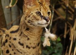 pippa-smith-5465-copyright-photographers-on-safari-com