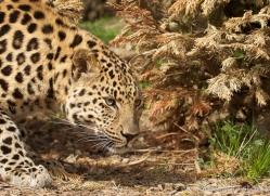 robbie-jerrom-5468-copyright-photographers-on-safari-com
