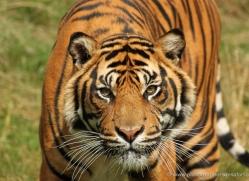 sarah-kate-tunstall-5474-copyright-photographers-on-safari-com