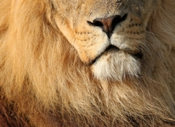 sarah-kate-tunstall-5476-copyright-photographers-on-safari-com