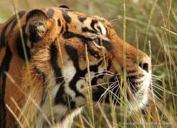 sarah-kate-tunstall-5477-copyright-photographers-on-safari-com