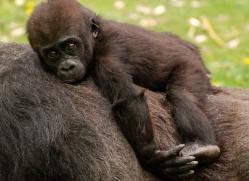 sarah-riggens-5603-copyright-photographers-on-safari-com