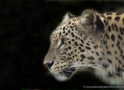 sharon-dowson-5606-copyright-photographers-on-safari-com