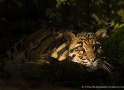 sharon-dowson-5608-copyright-photographers-on-safari-com