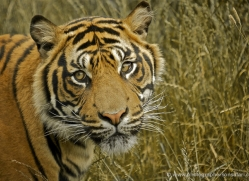 simon-mounteney-5479-copyright-photographers-on-safari-com