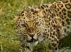 simon-mounteney-5480-copyright-photographers-on-safari-com