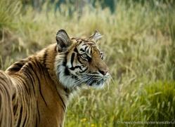 simon-mounteney-5481-copyright-photographers-on-safari-com