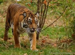 tony-booker-5482-copyright-photographers-on-safari-com