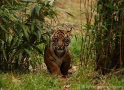 tony-booker-5483-copyright-photographers-on-safari-com
