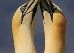 wies-dykstra-5486-copyright-photographers-on-safari-com