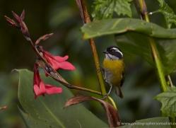 bird-costa-rica-5320-copyright-photographers-on-safari-com