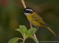 bird-costa-rica-5321-copyright-photographers-on-safari-com