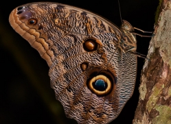 Butterfly 2014 -1copyright-photographers-on-safari-com