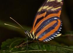 Butterfly 2014 -2copyright-photographers-on-safari-com