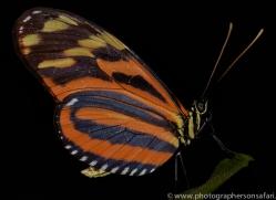 Butterfly 2014 -3copyright-photographers-on-safari-com