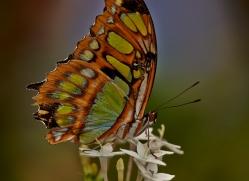 Butterfly 2014 -6copyright-photographers-on-safari-com