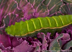 Caterpillar 2014 -1copyright-photographers-on-safari-com