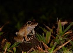 Frog 2014 -1copyright-photographers-on-safari-com