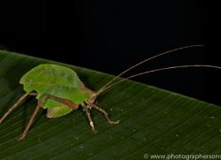 Insect 2014 -1copyright-photographers-on-safari-com