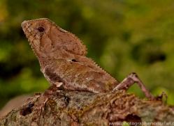 Lizard 2014 -2copyright-photographers-on-safari-com