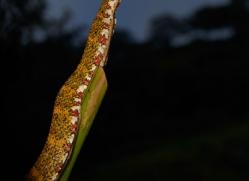 Snake 2014 -10copyright-photographers-on-safari-com