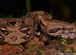 Snake 2014 -1copyright-photographers-on-safari-com