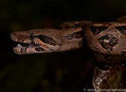 Snake 2014 -2copyright-photographers-on-safari-com