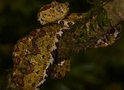 Snake 2014 -6copyright-photographers-on-safari-com
