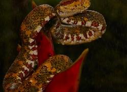 Snake 2014 -7copyright-photographers-on-safari-com