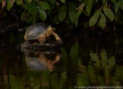 Turtle 2014 -8copyright-photographers-on-safari-com