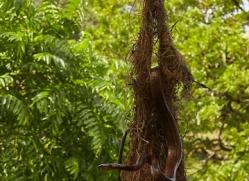 bird-eating-snake-copyright-photographers-on-safari-com-7991