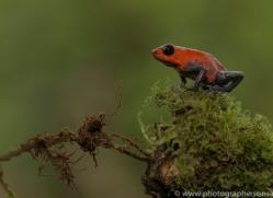 blue-jeans-frog-copyright-photographers-on-safari-com-7995