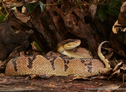 bushmaster-5227-copyright-photographers-on-safari-com