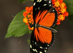 butterfly-costa-rica-5155-copyright-photographers-on-safari-com